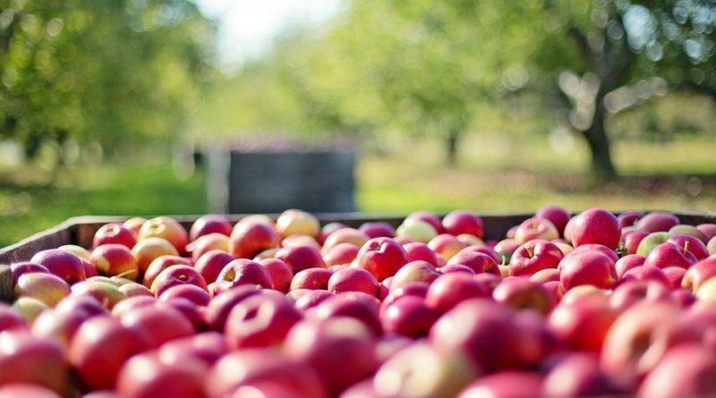 Rozpoczęły się dostawy owoców i warzyw z Chin do Rosji i Białorusi