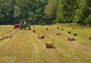 Amerykanie wstrzymują import polskiej wieprzowiny