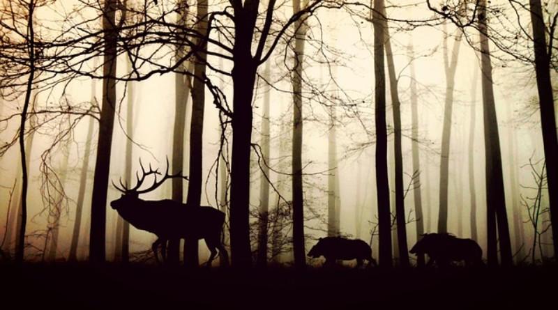 Mateusz Marzoch: Kocham zwierzęta bardziej niż ludzi [FELIETON]