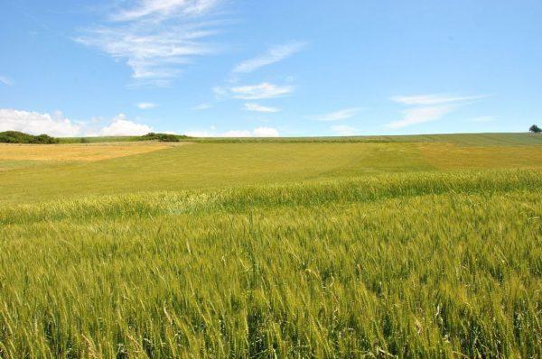 Klaudiusz Hydrolog: Geneza zjawiska suszy w Polsce