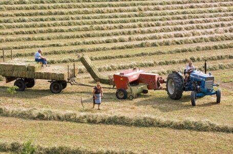 """""""Stop usuwaniu rolnictwa ze wsi"""" – apelują rolnicy. Żniwa w pełni, a sąsiedzi skarżą się na… zakłócanie spokoju"""