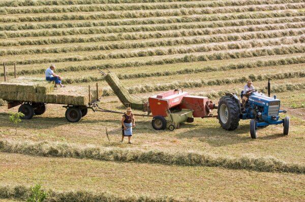 """""""Stop usuwaniu rolnictwa ze wsi"""" - apelują rolnicy. Żniwa w pełni, a sąsiedzi skarżą się na... zakłócanie spokoju"""